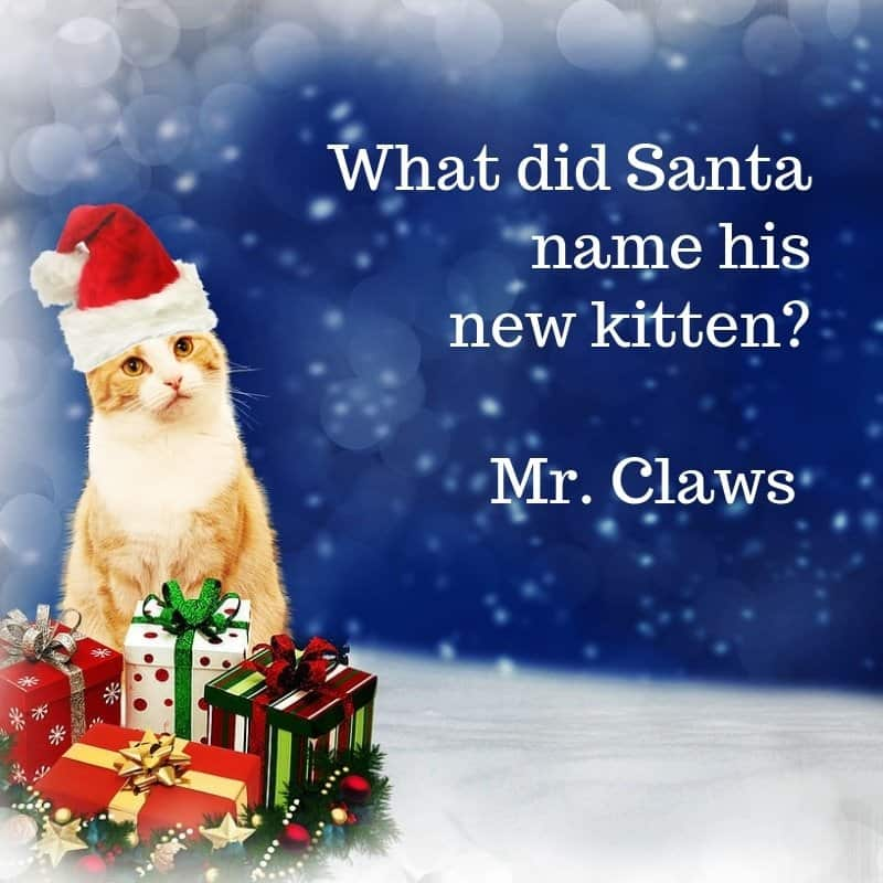 Holiday riddles with answers cat
